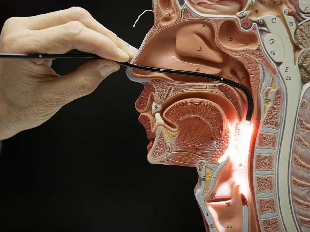 ear, nose and throat endoscopic examination to stop snoring